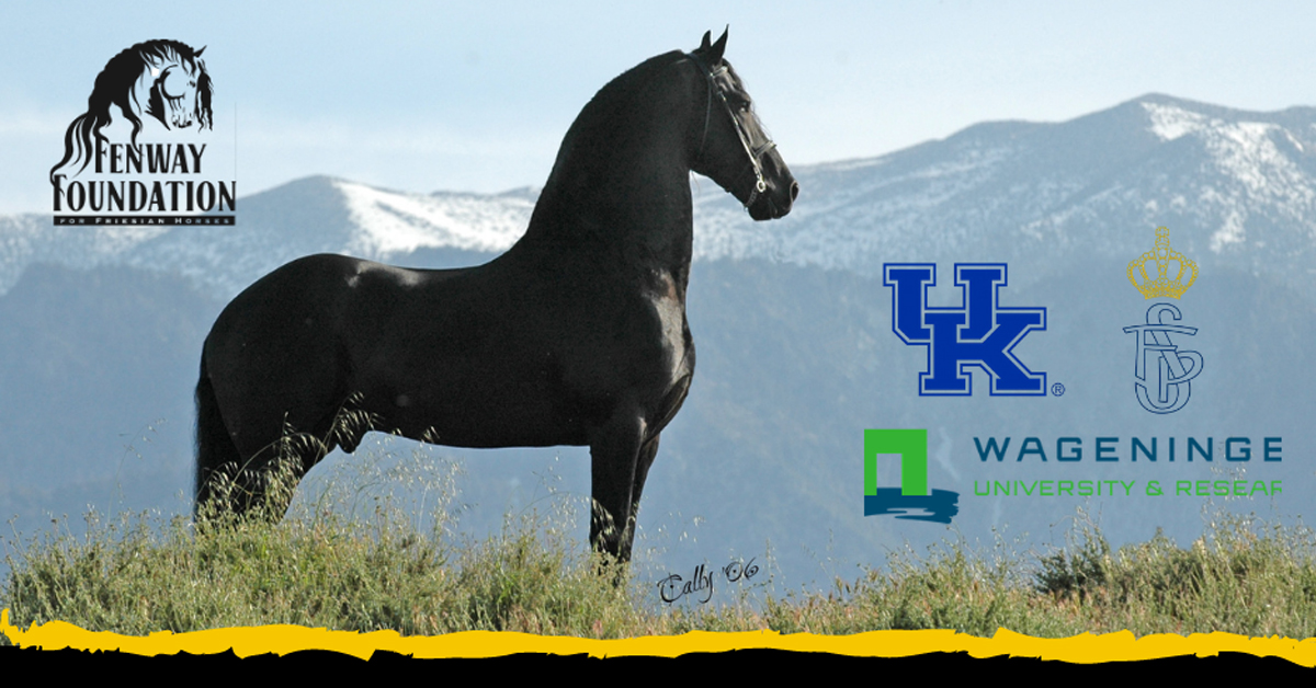 Thumbnail for New Research to Uncover Cause of Genetic Flaws in Friesians