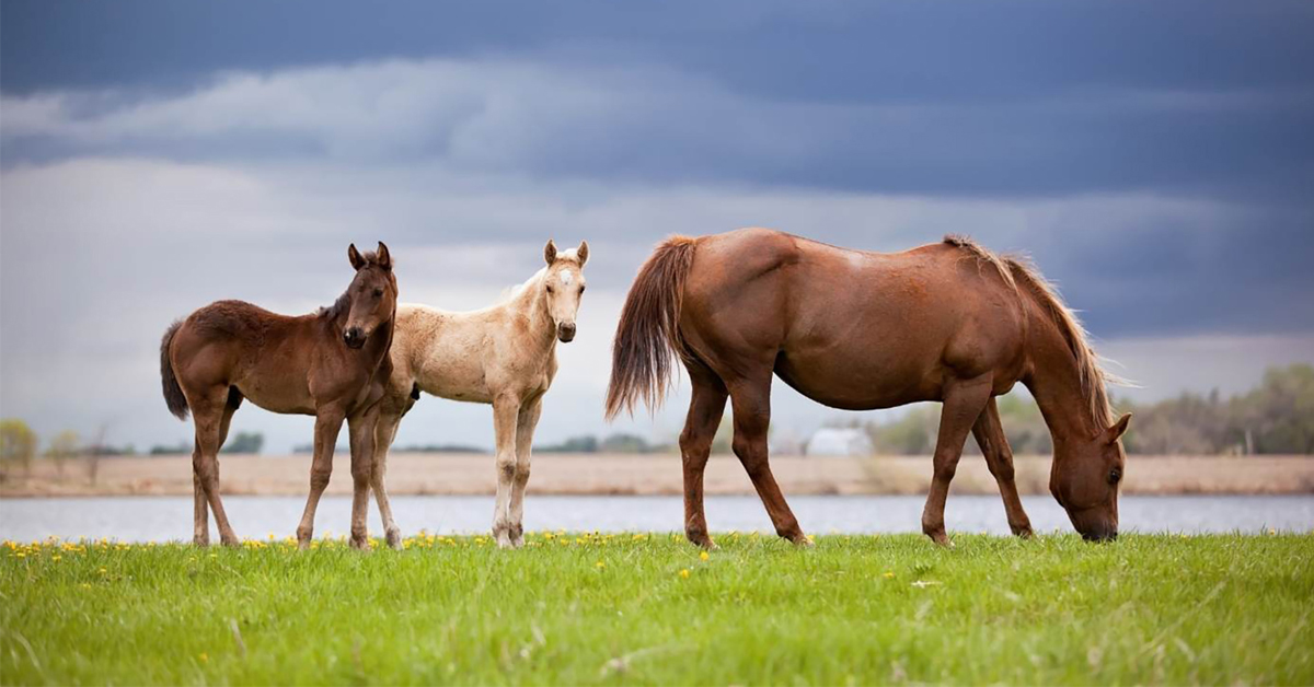 Thumbnail for Virtual Equine Reproductive Management Short Course for 2021