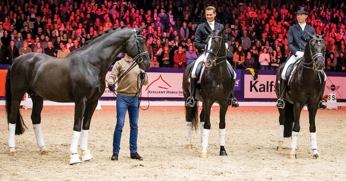 Thumbnail for Dressage World Champion and Sire Totilas Dies at 20