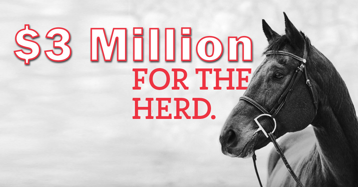 Thumbnail for Ontario Government Announces $3 Million for Horse Businesses