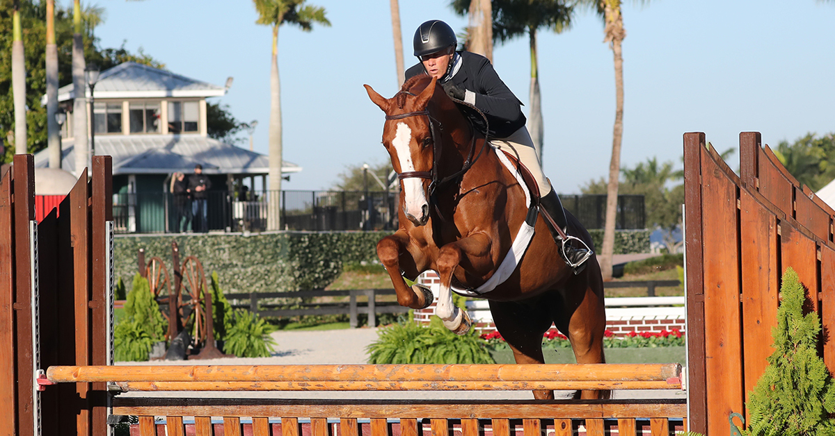 Thumbnail for Chris Brown Rides Canadian Warmblood Rebel to Championship at WEF