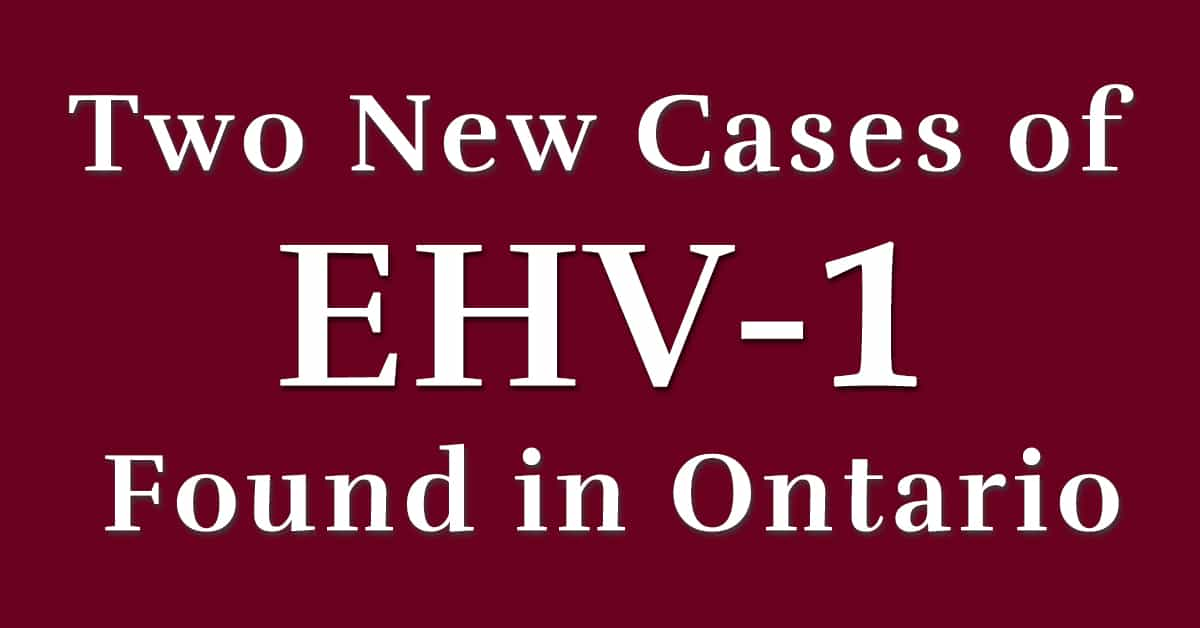 Thumbnail for Two New Cases of EHV-1 Found in Ontario, Total Now Four