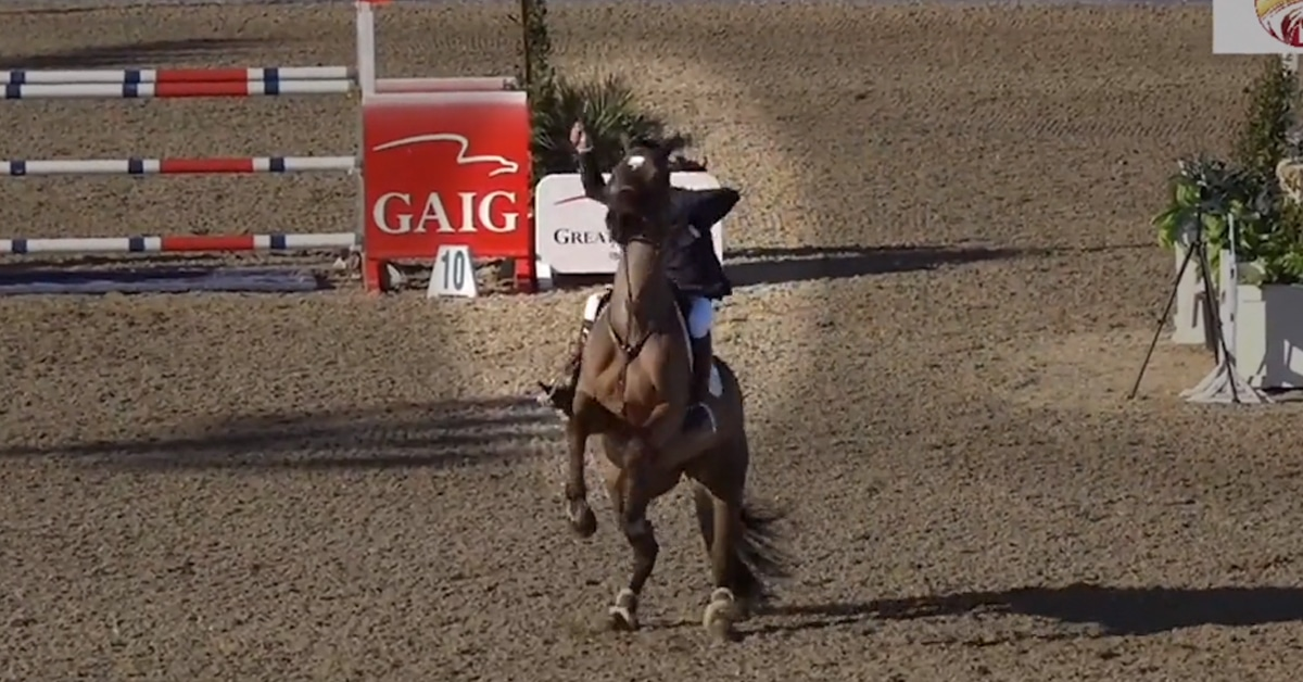 Thumbnail for PETA Turns its Focus on Show Jumping