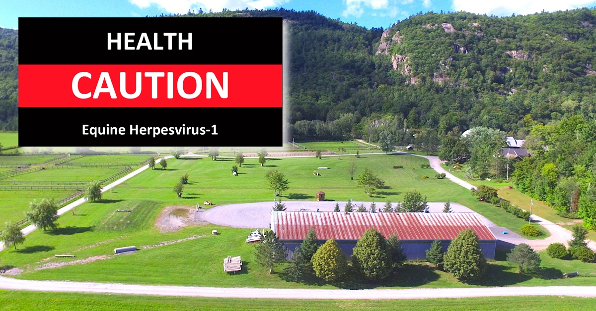 Thumbnail for EHV-1 Outbreak Ongoing at Venturing Hills Equestrian