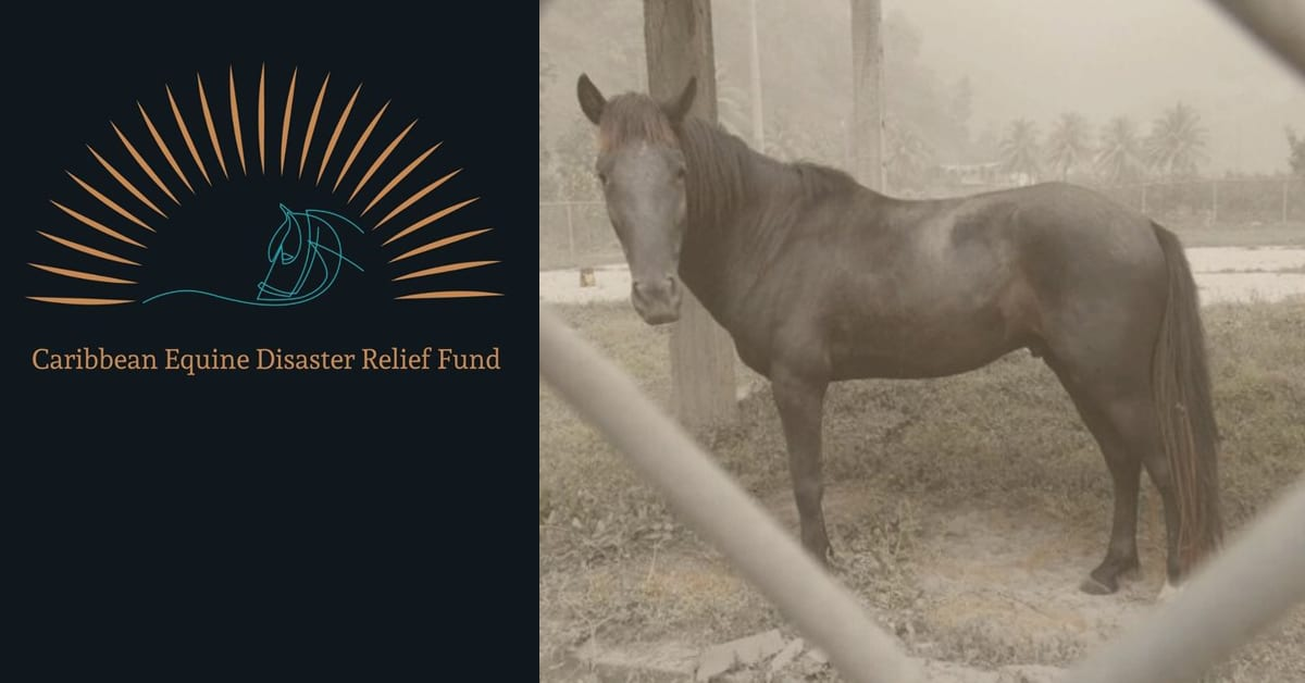 Thumbnail for Donations Sought by Caribbean Equine Disaster Relief Fund