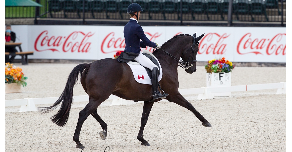 Thumbnail for Chris von Martels and Eclips Third in FEI Grand Prix CDI 4*
