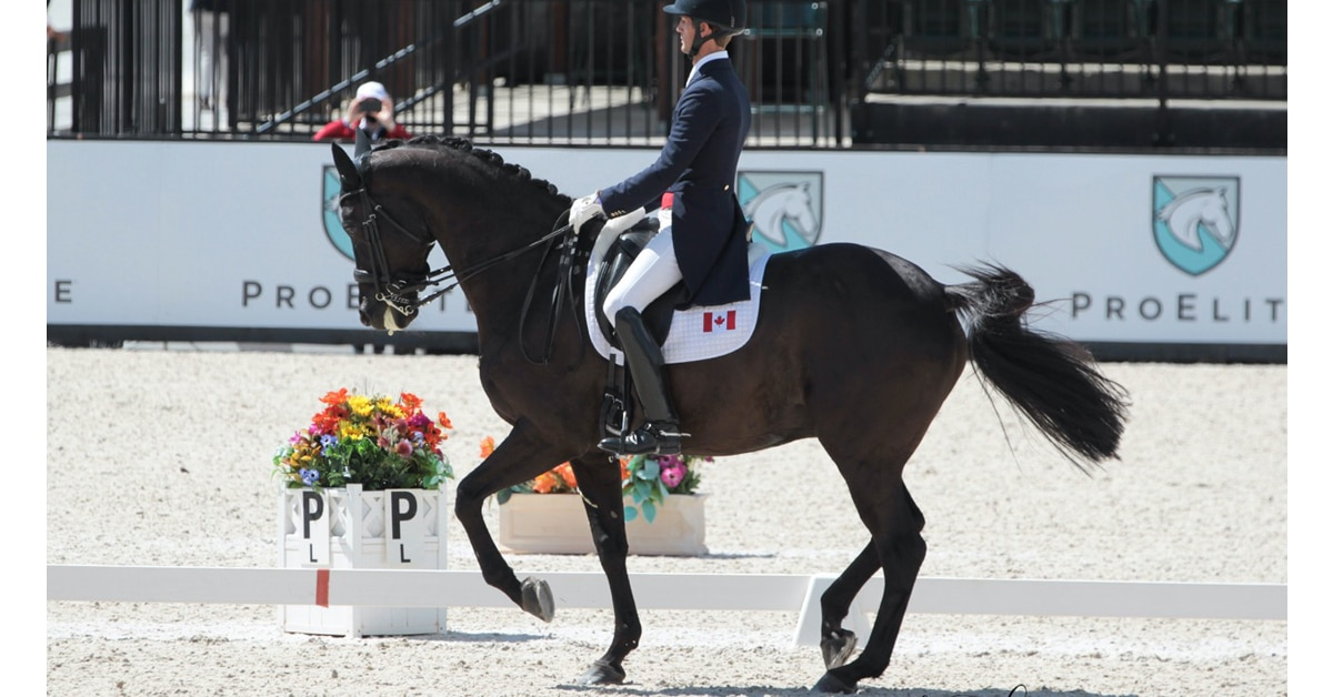 Thumbnail for Chris von Martels and Eclips Win FEI Grand Prix Freestyle