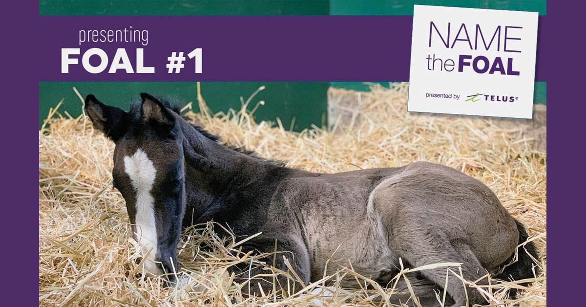 Thumbnail for Spruce Meadows Update: Name The Foal and 46th Anniversary