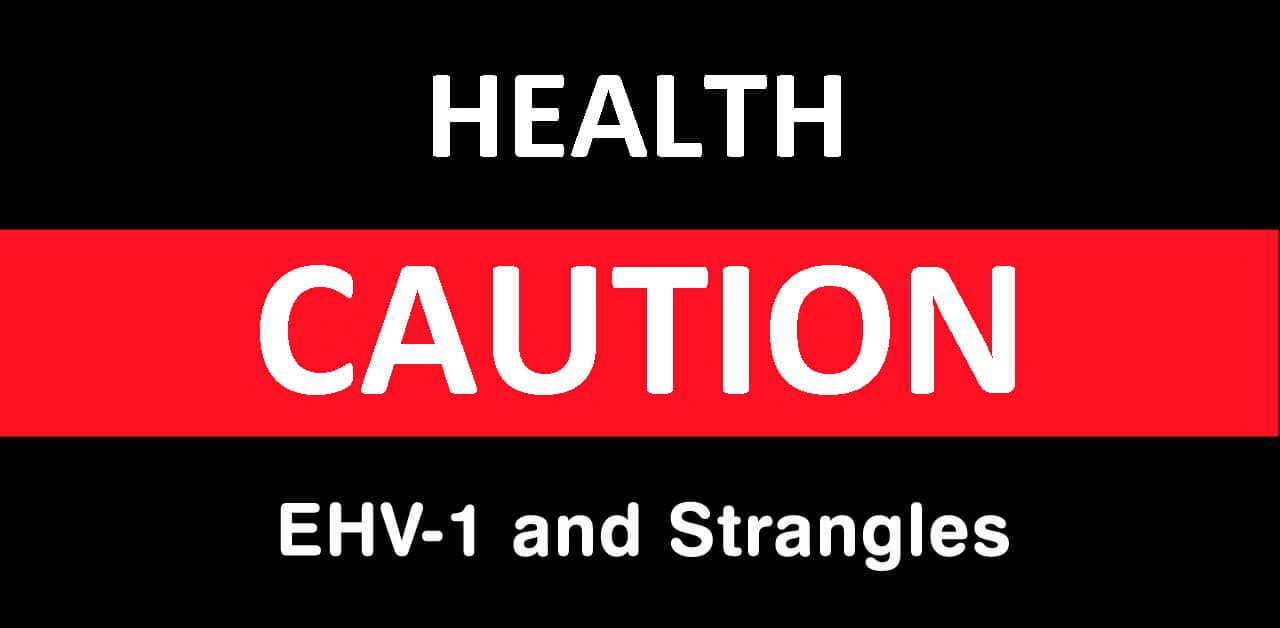 Thumbnail for Health Alert: EHV-1 and Strangles Cases Reported