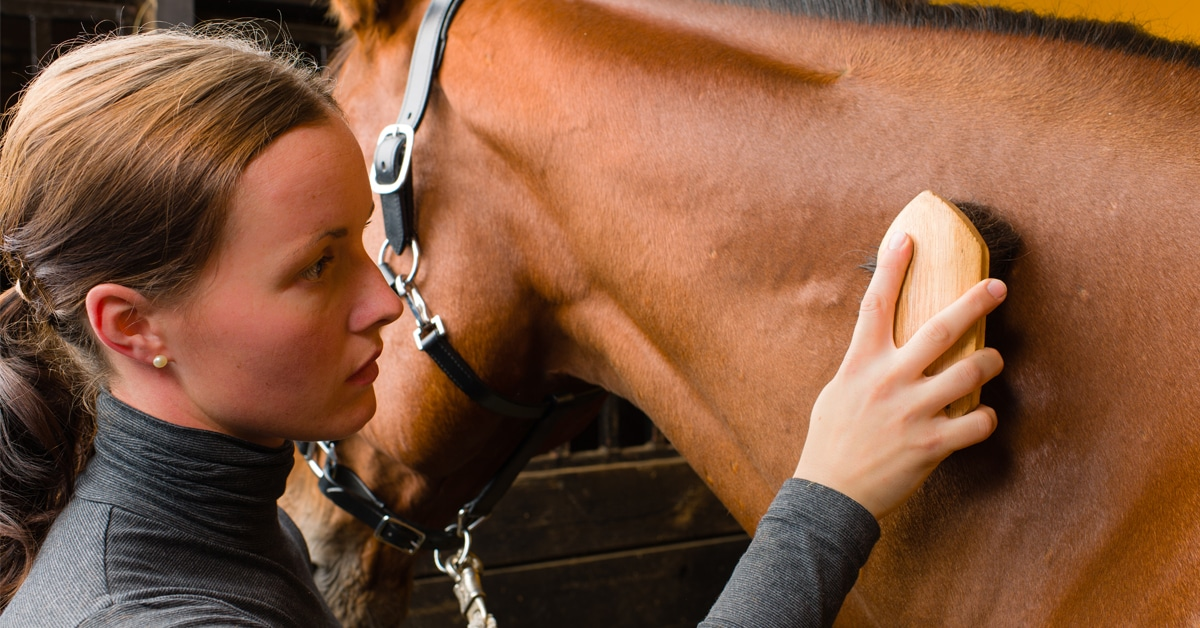 Thumbnail for Grooms to Get Long-Overdue Recognition From FEI