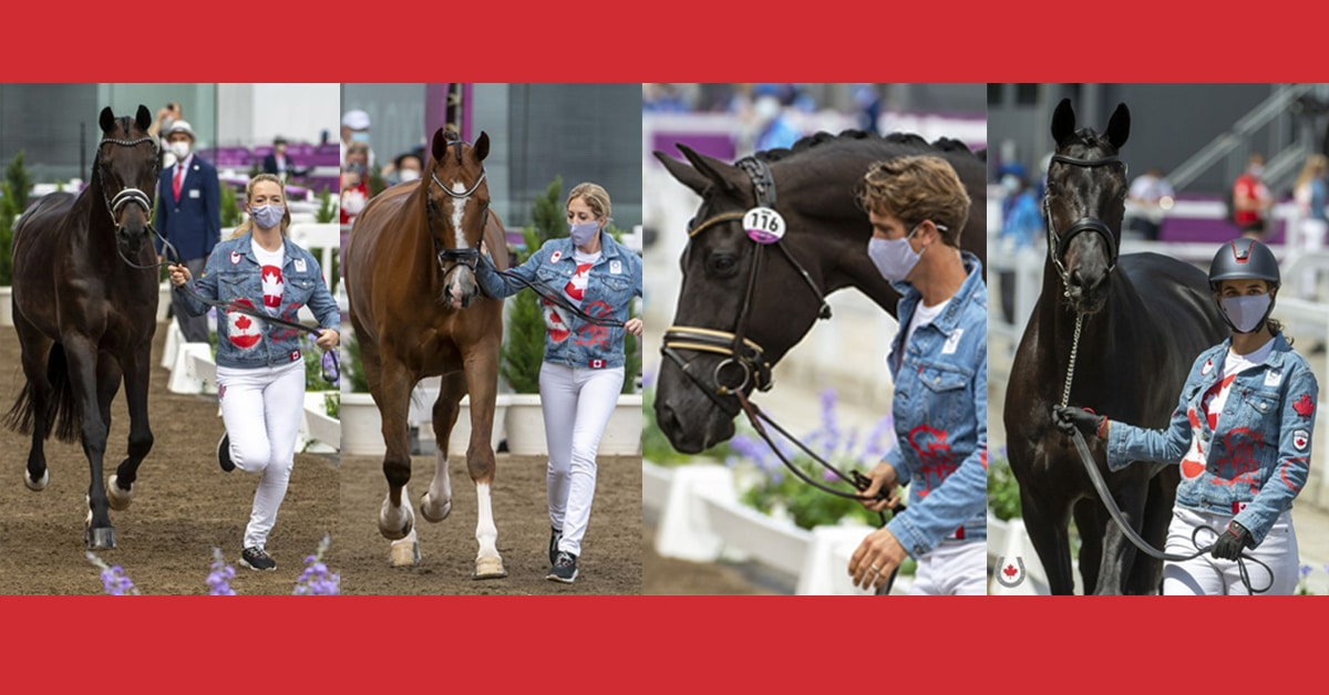 Thumbnail for All Canadian Dressage Team Horses Pass First Jog in Tokyo